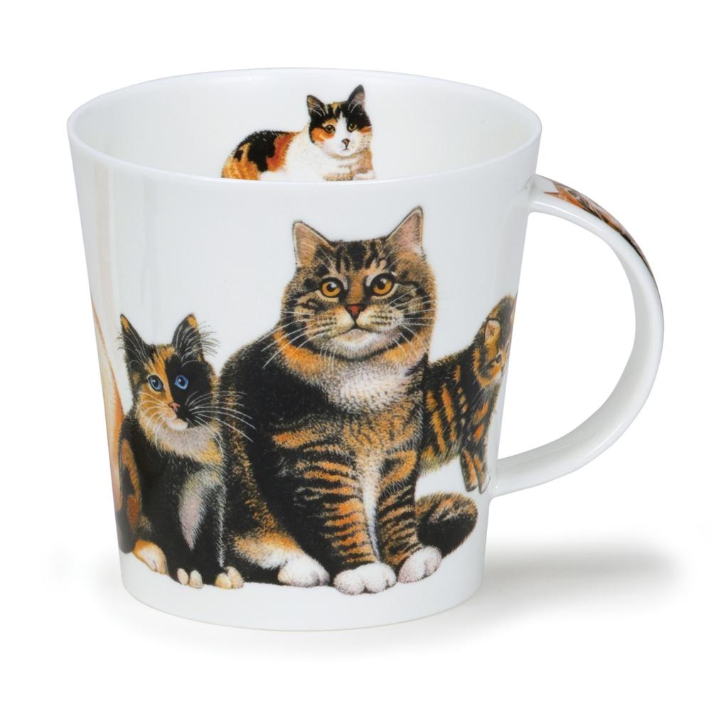CAIR CATS & KITTENS TABBY
