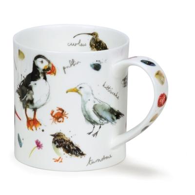 ORKNEY COASTAL BIRDS