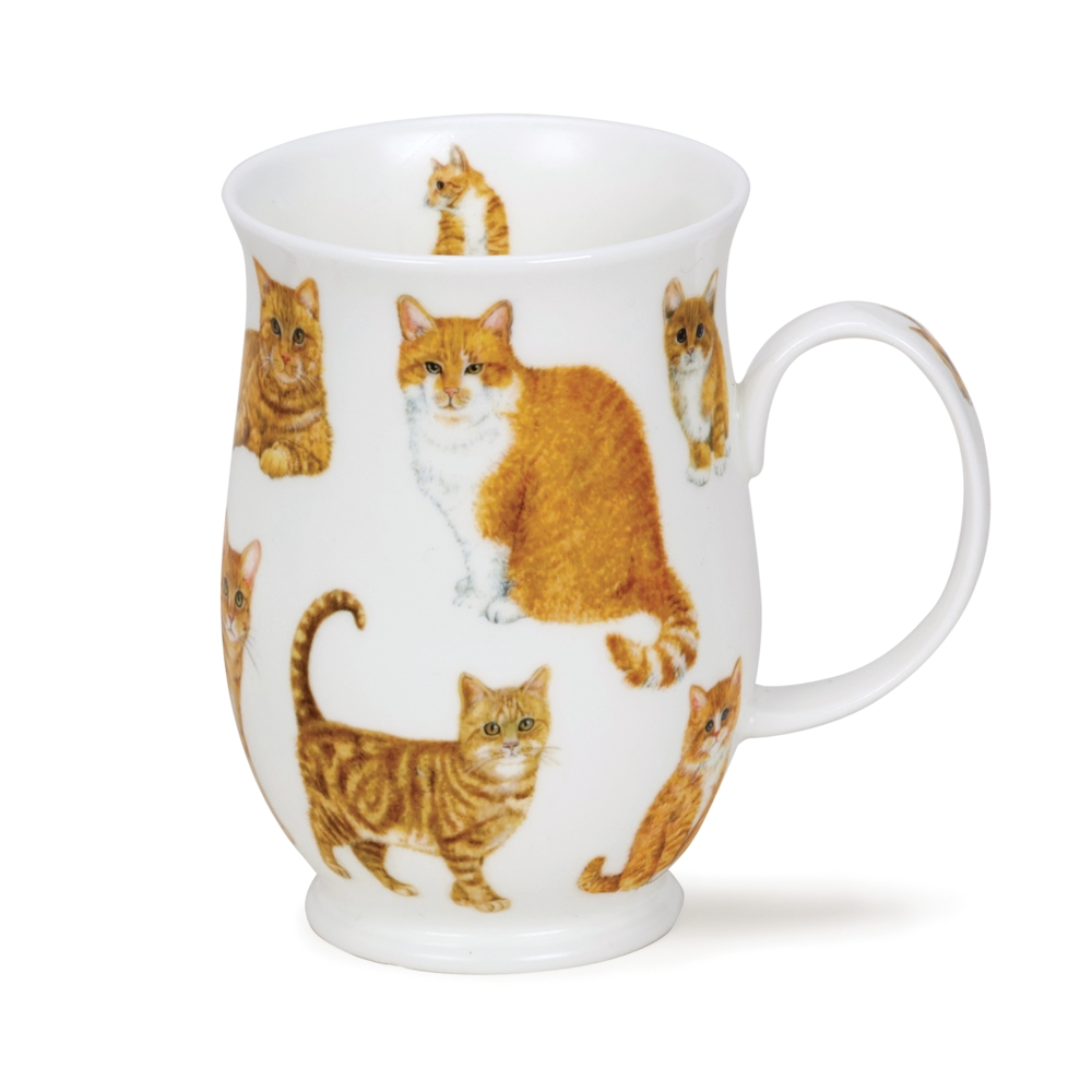 SUFFOLK CATS GINGER