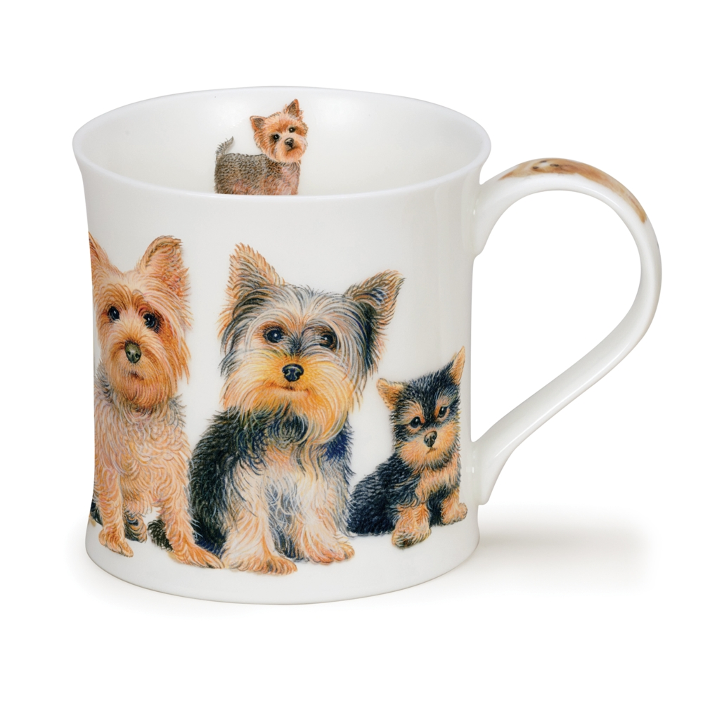 WESSEX DESIGNER DOGS YORKSHIRE TERRIER