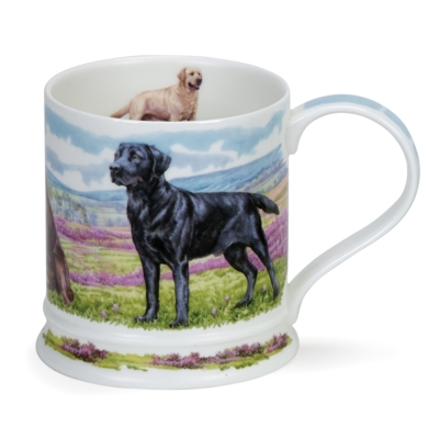 IONA COUNTRY DOGS LABRADORS
