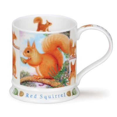 IONA WILDLIFE RED SQUIRREL