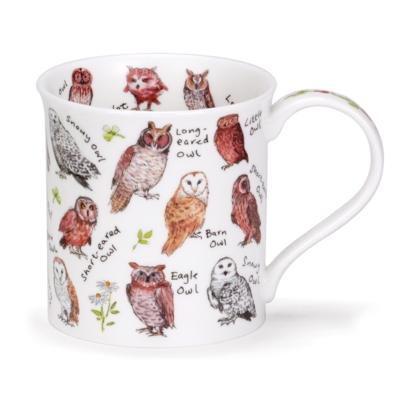 BUTE BIRDLIFE OWLS