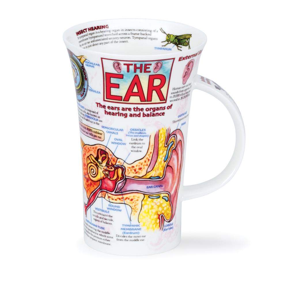 GLENCOE THE EAR
